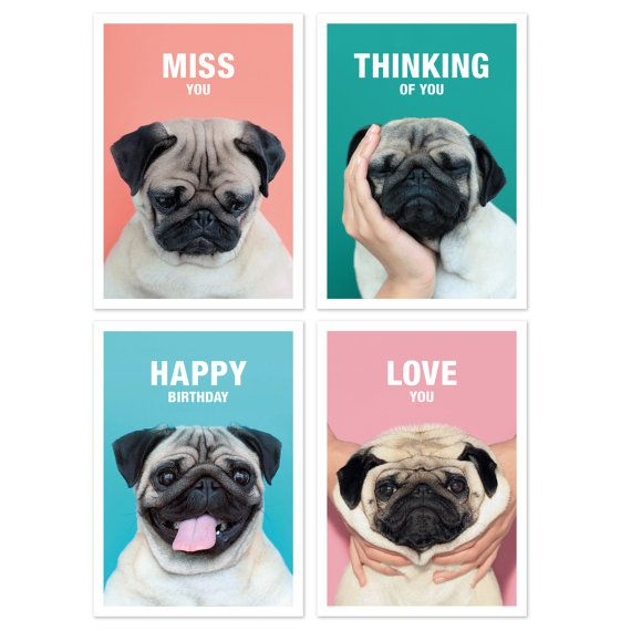 Set of 4  Loulou the Pug  Greeting Cards
