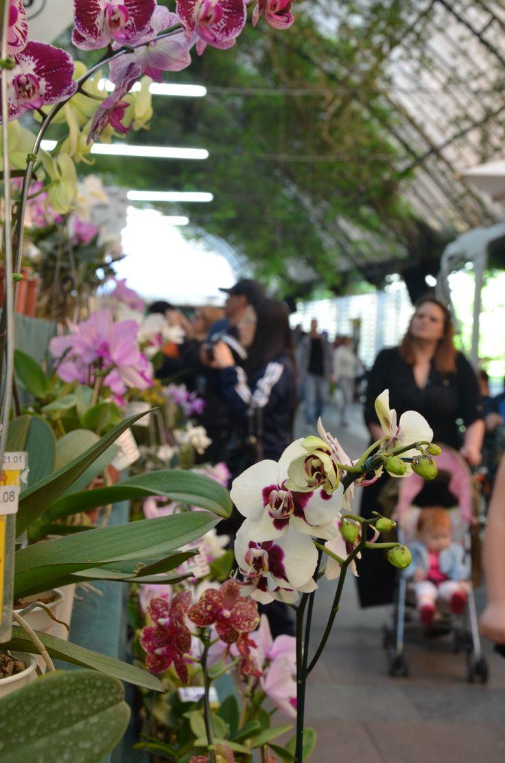 XII Exposição Internacional de Orquídeas de Gramado/RS. Foto: Cássio Brezolla
