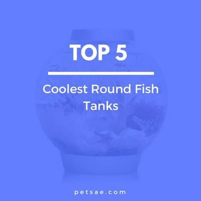Round Fish Tank: Top 5 Coolest Round Fish Tanks