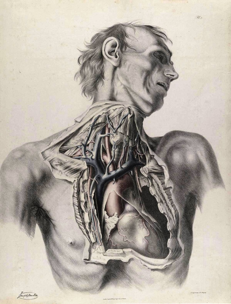 Quain, Richard (1800-1887 http://www.pinterest.com/pin/287386019946913547/). Joseph Maclise. The anatomy of the arteries of the human body, with its applications to pathology and operative surgery (pinterest.com/pin/287386019946919258/). See: http://www.pinterest.com/pin/287386019946534179/