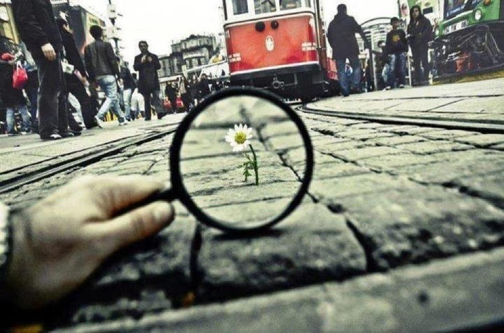 Flower in Istiklal Avenue