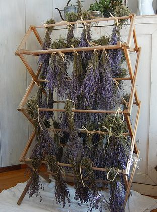Drying lavender on a laundry rack
