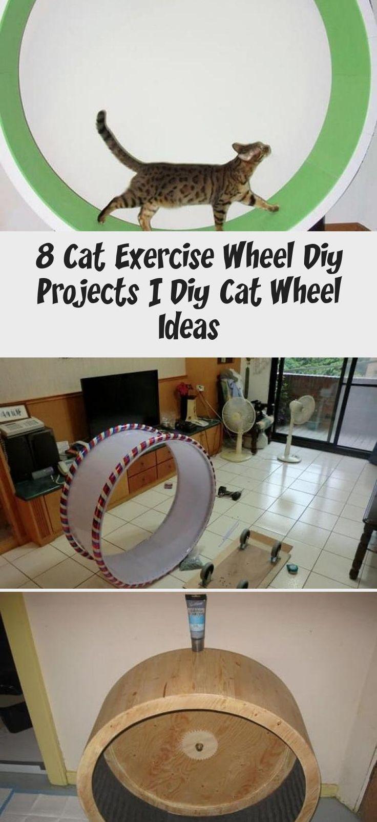 8 cat exercise wheel diy projects diy cat wheel ideas