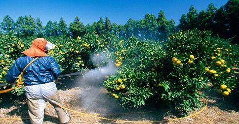 Ako jednoducho odstrániť pesticídy z ovocia a zeleniny
