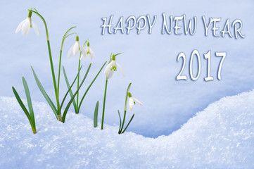 http://beoriginals.cz/wp-content/uploads/Happy-new-year-2017.jpg