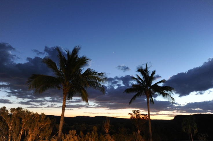 Homestead Palms at Sunset