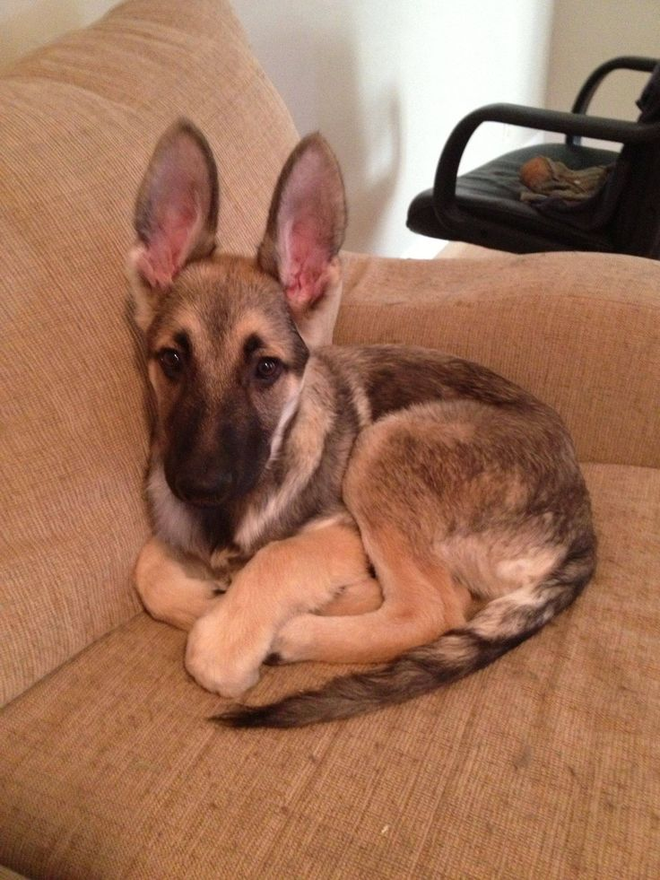 Odysseus is all ears - Imgur