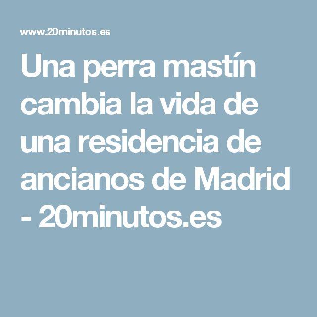 Una perra mastín cambia la vida de una residencia de ancianos de Madrid - 20minutos.es