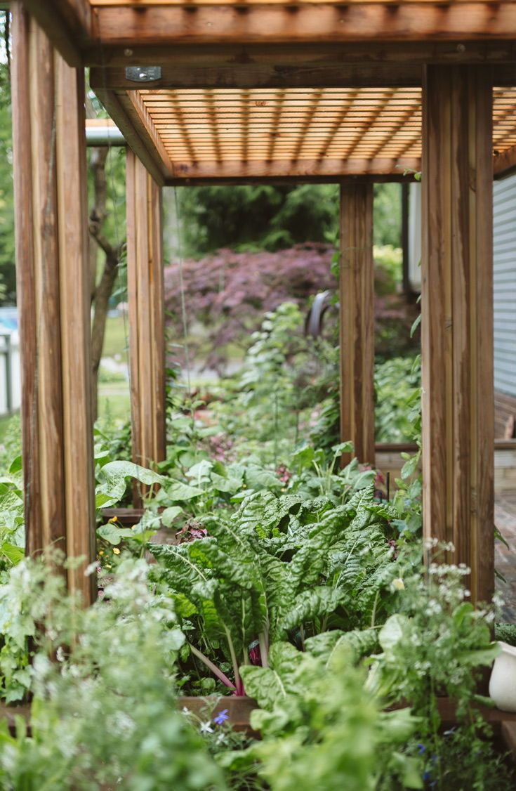 amazel basil ocimum hybrid create a backyard cottage garden rh pinterest com