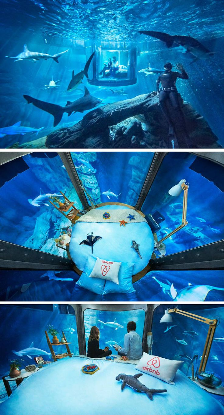 You can now sleep in this underwater room surrounded by sharks
