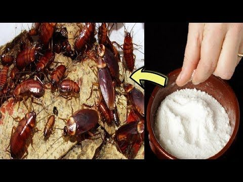 How to get rid of cockroaches fast in kitchen cabinets ...