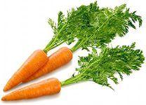 Марганцовка для морковки  Чтобы не привлечь морковную муху при прореживании моркови, нужно взять ведро воды и развести в нем 1 столовую ложку красного или черного молотого перца (хватит на 10 кв.м). Настаивать не нужно, лишь обрызгать морковь настоем перед прореживанием.  Если хотите получить урожай хорошей чистой моркови (без всякой гнили, заразы и т. д.) советую обязательно после второго прореживания в начале июля полить молодые растения водой (на ведро) с разведенной в ней марганцовкой…