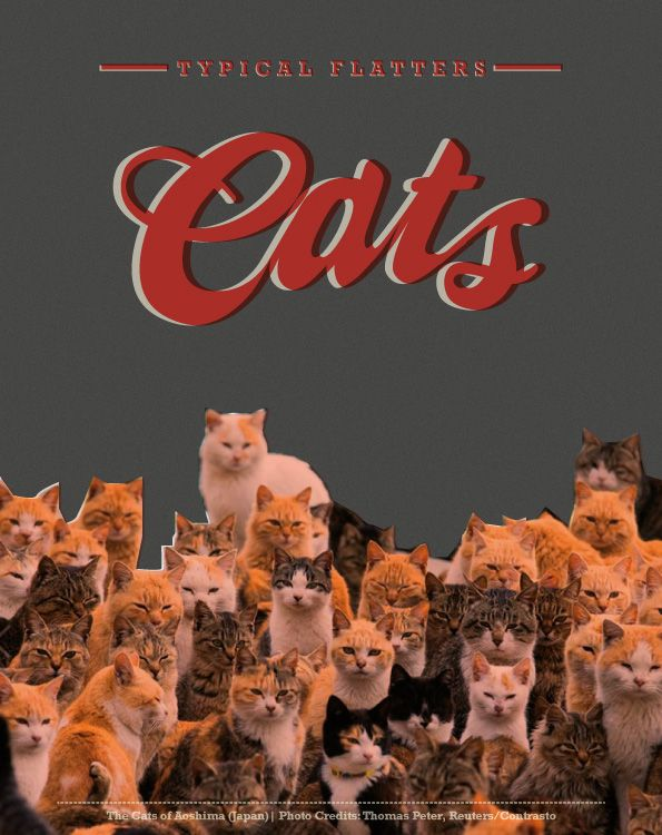 """Cats"" Gattini Nite per Flat [graphic: chiarawillow / photo credits: Thomas Peter ""the cats of Aoshima""]"