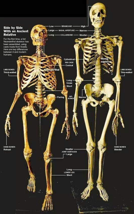 Neanderthal vs Home sapien.
