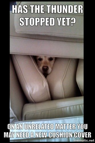 Pin by Collin Long on LOL | Pinterest | Funny animals, Dogs and Animals