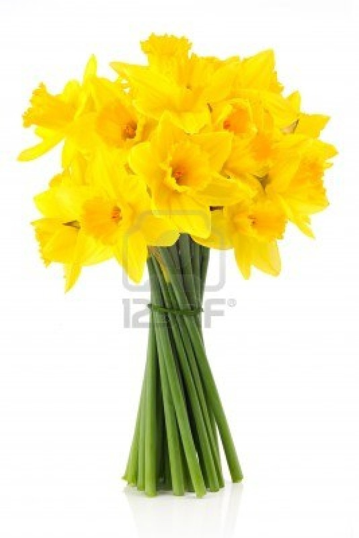 Best 25 daffodil wedding flower pictures ideas on pinterest bouquet of yellow daffodils buycottarizona