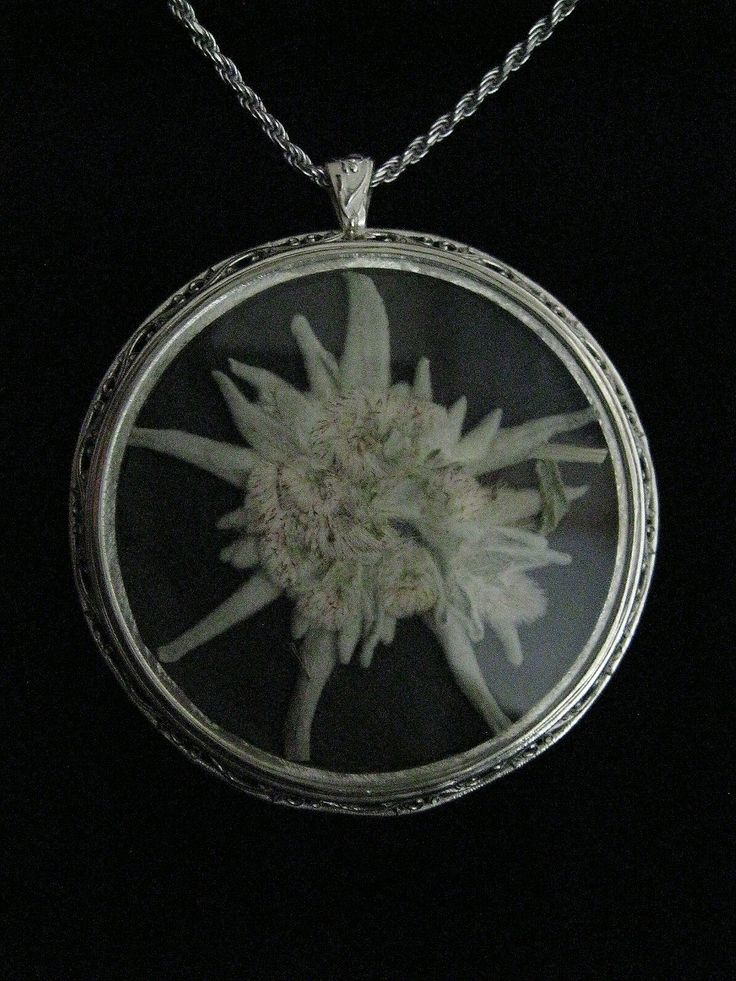 We put this real, dried edelweiss flower into a glass