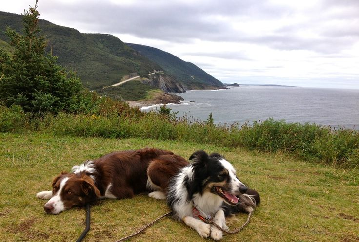 Handsomedogs Border Collies Blitz And Mara In Cape Breton Border Collie Dogs Of The World Border Collie Pictures