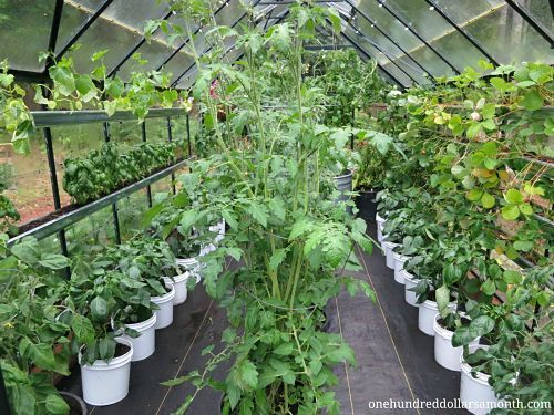 how to grow food in a greenhouse: Gardens Greenhouses, Greenhouses Ideas, Greenhouses Homesteads, Greenhouses Growing, Greenhouses Info, Future Sunroom Greenhouses, Greenhouses Gardens, Attached Greenhouses, Gardens Sheds Greenhouses