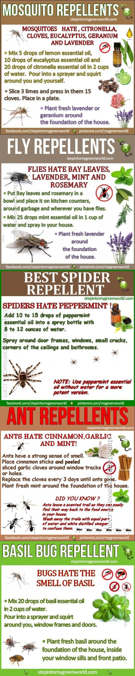 Best Homemade Mosquito And Insect Repellent http://campingtentlover.com/best-family-camping-tents/