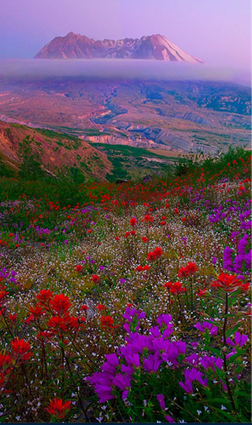 Mount St Helens Wildflowers Wildflowers, Southern and Amazing places - küchentisch und stühle