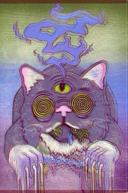 Trippin out with my cat.