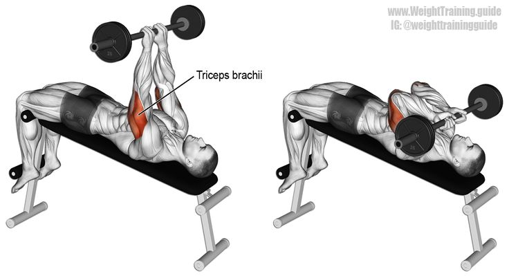 Decline skull crusher. An isolation exercise. Target muscle: Triceps Brachii. Synergistic muscles: None. Visit site for instructions.