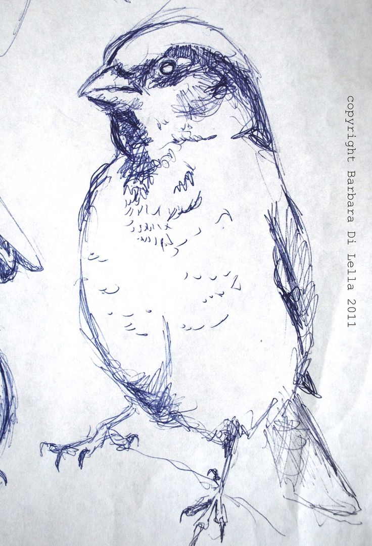 a very quick sketch  of  a sparrow with an ordinary pen