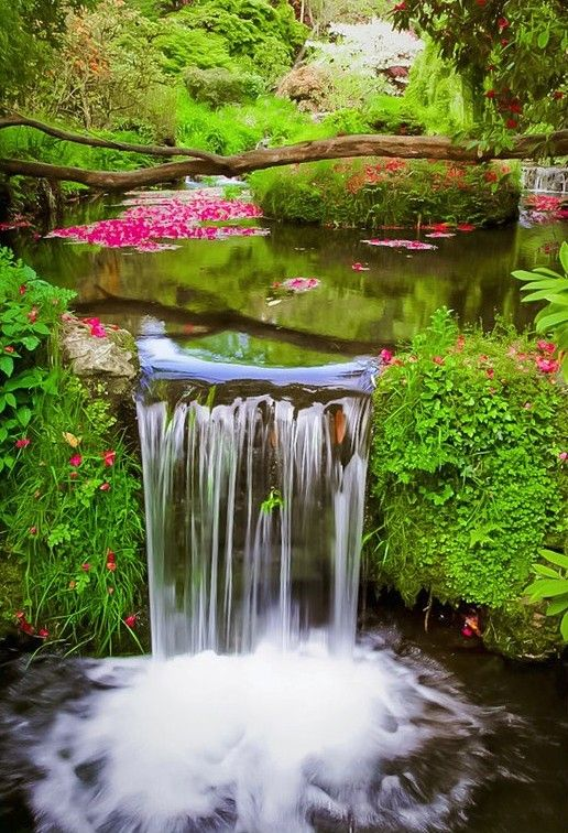 Best Plants Waterfalls