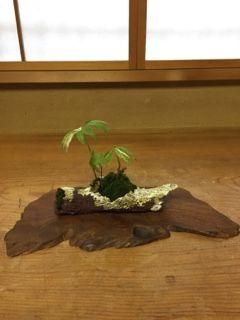 こちらはベルギー鉢作家の鉢です。 植えてあるのは、フランスアルプスのハルサメ草、...