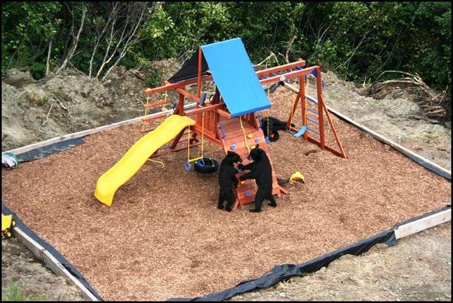 bear playground 1 ready.jpg 640×428 pixels
