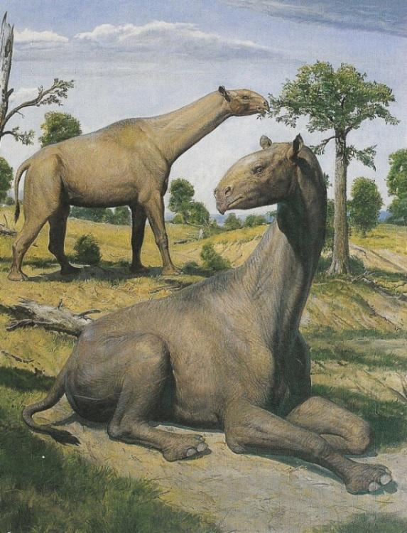 Indricotherium transouralicum | Prehistoric Animals ...