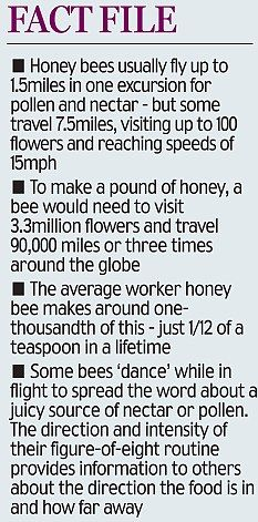 ADOPT A BEEHIVE                                                                                                                                                                                 More