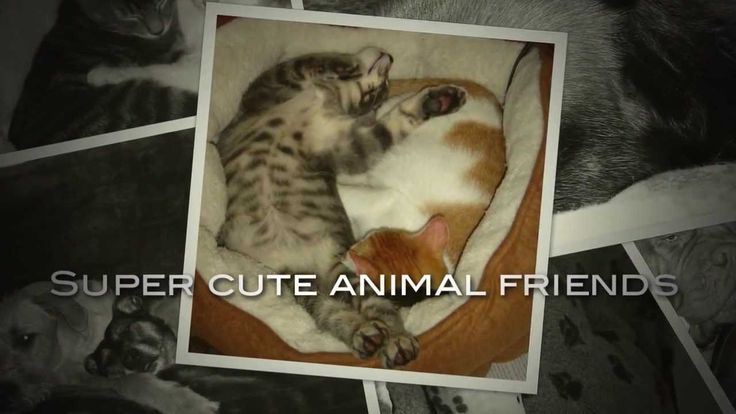 Super cute animal friends