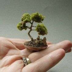very tiny bonsai tree. Can you imagine how difficult it is to trim and prune, much less take care of!, such a tiny tree. Find out how
