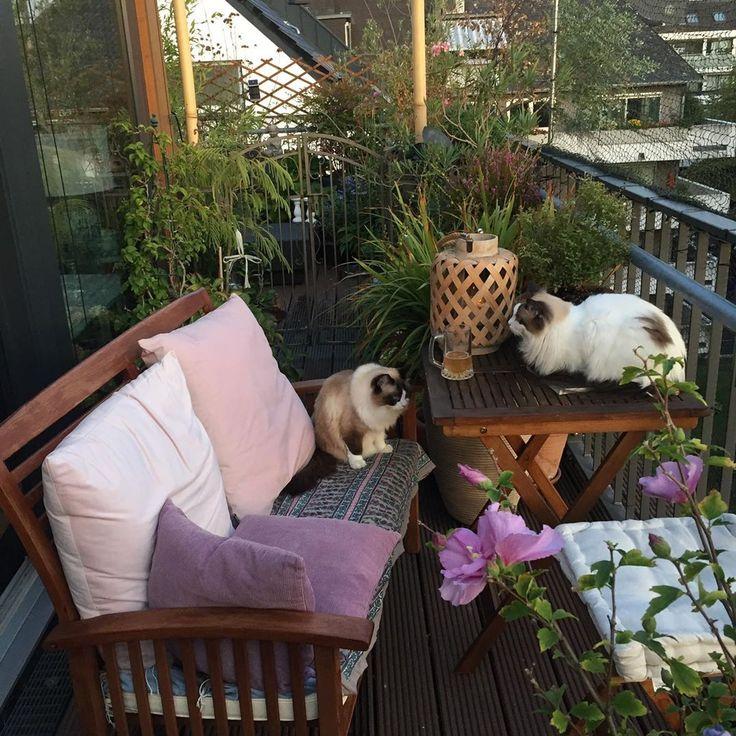 # Dach #Sommer #Balkon #Blumen #Pflanzen #Blumen   – wohnen
