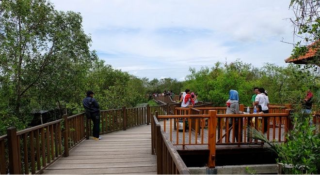 gambar wisata hutan mangrove wonorejo di surabaya - http://panwis.com/jawa-timur/wisata-hutan-mangrove-wonorejo/