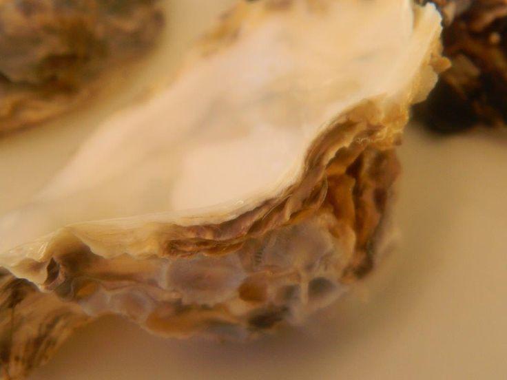 Ouster  Shell 1 -  by Daniel Augustyn
