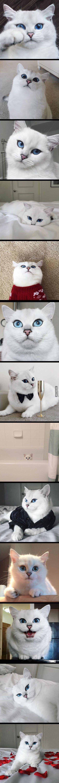 God..... Que gato maravilhoso!