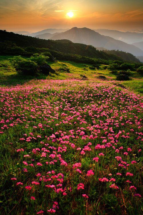 a field of alpine flowers by Yoshifumi Kimura on 500px.com