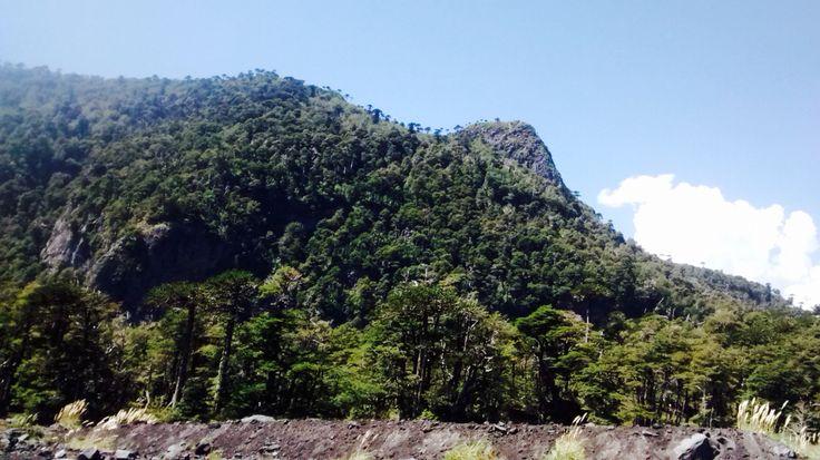 National Park Conguillio