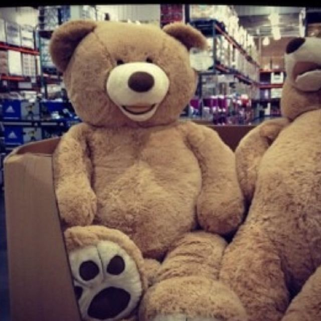 Big Teddy Bear Walmart August 2017