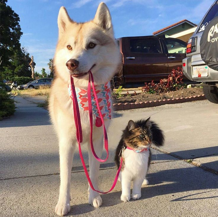 Best Huskies Images On Pinterest Siberian Huskies Husky - The 25 best posts about huskies on the internet