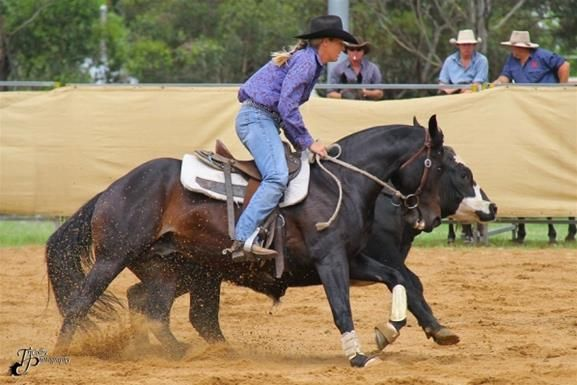 campdrafting - Google Search