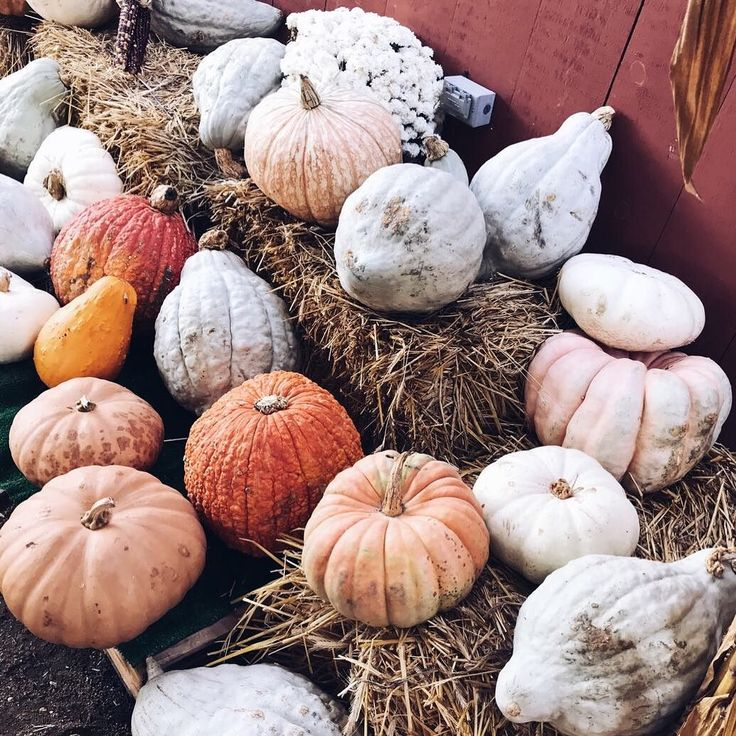 When your pumpkins color scheme are so on point  as we have to pick out ALL new furniture color schemes are heavily on my mind. Wishing instead I could just decorate the floor with pumpkins and call it a day  #helpsendfurniture