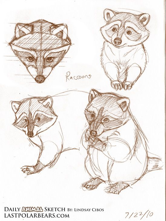 daily sketch racoon