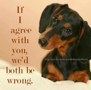 the dachshund is always right, you should really know this by now.