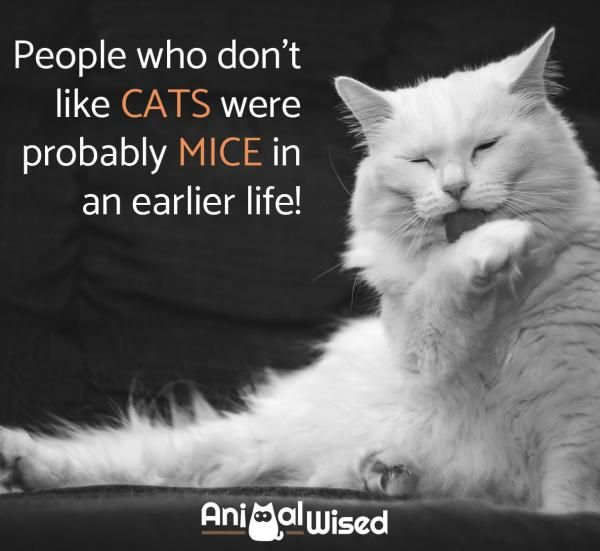 65 Cute Quotes About Cats Cat Quotes Cat Quotes Funny Animal
