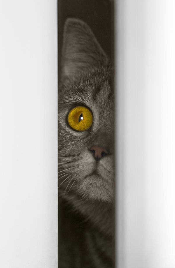 40 best diy privacy screen for your patio images on for Cat toys for when you re not home