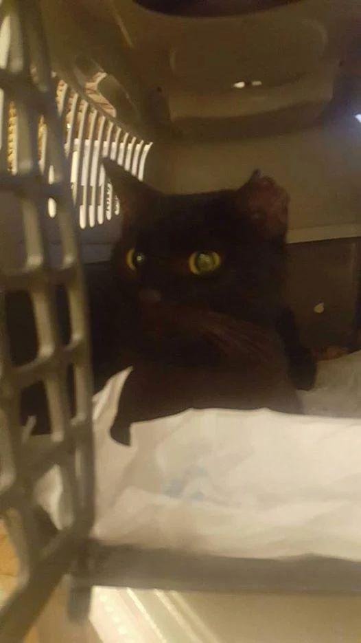 Ranny kot z białaczką. Kiedyś mieszkał w domu DT n cito!
